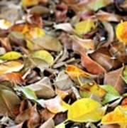Summer Leaves For Fall Art Print