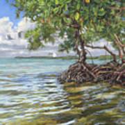 Summer Mangrove Melody Art Print