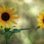 Summer Of Sunflowers  Art Print