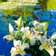 Summer Pond French Lilies Art Print