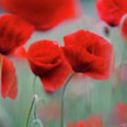 Summer Poppy Meadow 2 Art Print