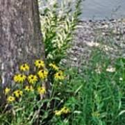 Summer River Bank View             July            Indiana Art Print