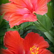 Summer Time Beauties - Hibiscus - Dora Sofia Caputo Art Print