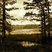 Summer Wetlands Art Print