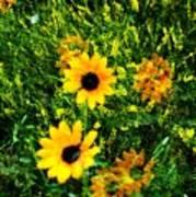 Summer Wildflower Dreams Art Print