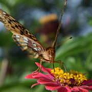 Summer's Sweet Nectar Art Print