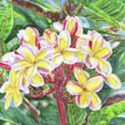 Summertime Kauai Island Plumeria Watercolor By Jenny Floravita Art Print
