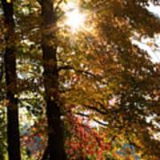 Sun And Autumn Art Print
