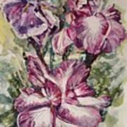 Sun And Iris Art Print