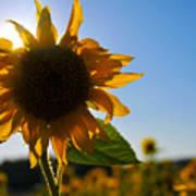 Sun And Sunflower Art Print