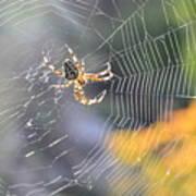 Spider On Web Art Print