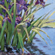 Sun Day - Iris In A Pond Art Print