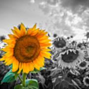 Sun Flower B And W Art Print