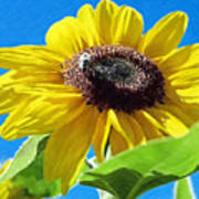 Sun Flower - Id 16235-142743-3974 Art Print