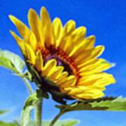 Sun Flower - Id 16235-142812-7136 Art Print