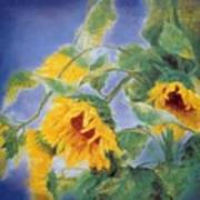 Sun Flowers No.3 Art Print