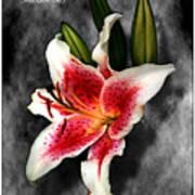 Sun Gazer Lily Poster Art Print