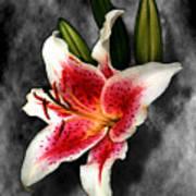 Sun Gazer Lily Art Print