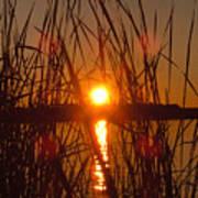 Sun In Reeds Art Print