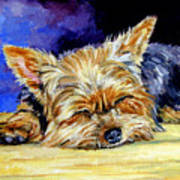 Sun Light Snoozer - Yorkshire Terrier Art Print by Lyn Cook
