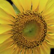 Sun Of Flowers Art Print