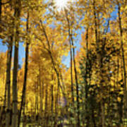 Sun Peaking Through The Aspens  Art Print
