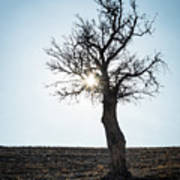 Sun Rays And Bare Lonely Tree Art Print