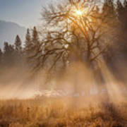Sun Rays In Yosemite Ground Fog Art Print