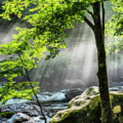 Sun Rays On Williams River  Art Print