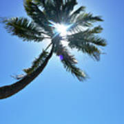 Sun Rays Through A Tall Palm Tree Art Print