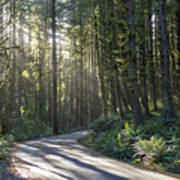 Sun Rays Through The Forest Art Print