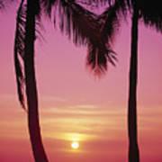 Sun Sets Between Pams Art Print