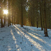 Sun Setting On Winter Woods Art Print