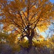 Sun Through Golden Leaves Art Print