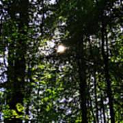 Sun Through Trees In Forest Art Print