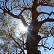 Sun Tree Art Print