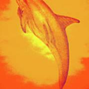 Sunburst Porpoise Art Print