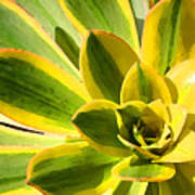 Sunburst Succulent Close-up 2 Art Print