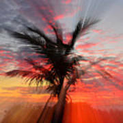 Sunburst Through Palm Tree Art Print