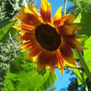 Sunflower 101 Art Print