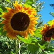 Sunflower 102 Art Print
