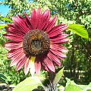 Sunflower 110 Art Print