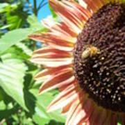 Sunflower 112 Art Print