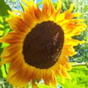 Sunflower 118 Art Print