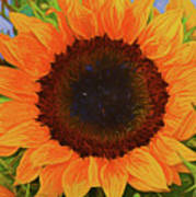Sunflower 12118-3 Art Print
