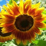 Sunflower 140 Art Print