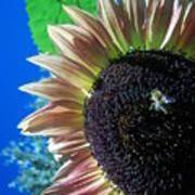 Sunflower 142 Art Print