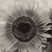 Sunflower 6 Art Print
