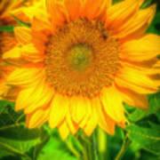 Sunflower 8 Art Print