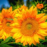 Sunflower 9 Art Print